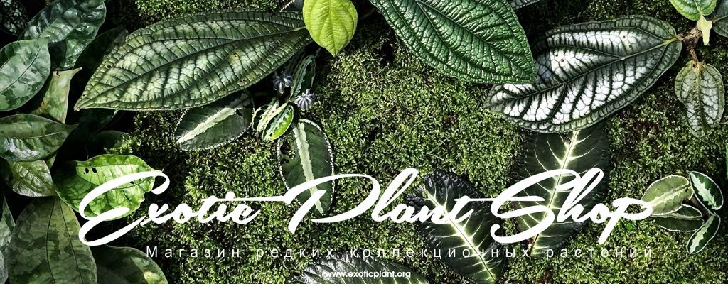 Exotic Plant Shop