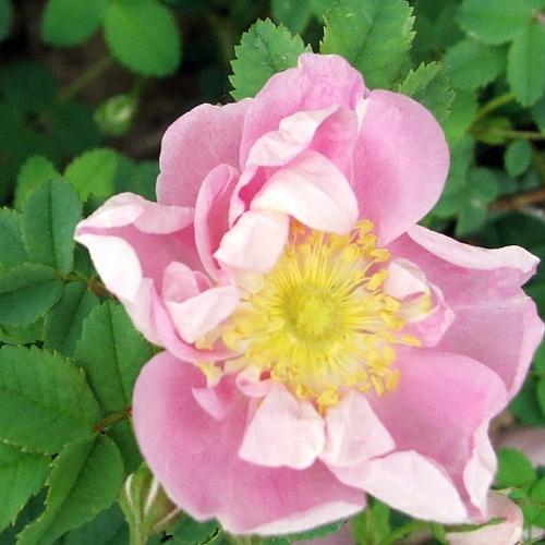 Rosa park Seager Wheeler