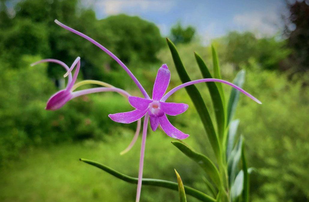 Внимание! С 21-го по 30-е июня  Exotic Plant в отпуске!
